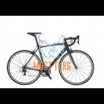 Jalgratas Bianchi Intenso raam 55cm